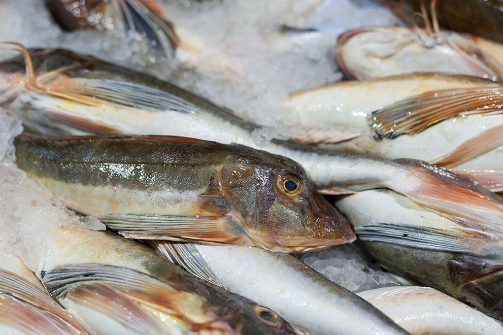 KOTRA-Zeeuwse-Pixels-bedrijfsfotografie-vis